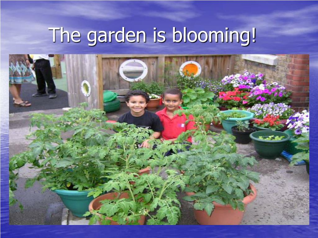 The garden is blooming!