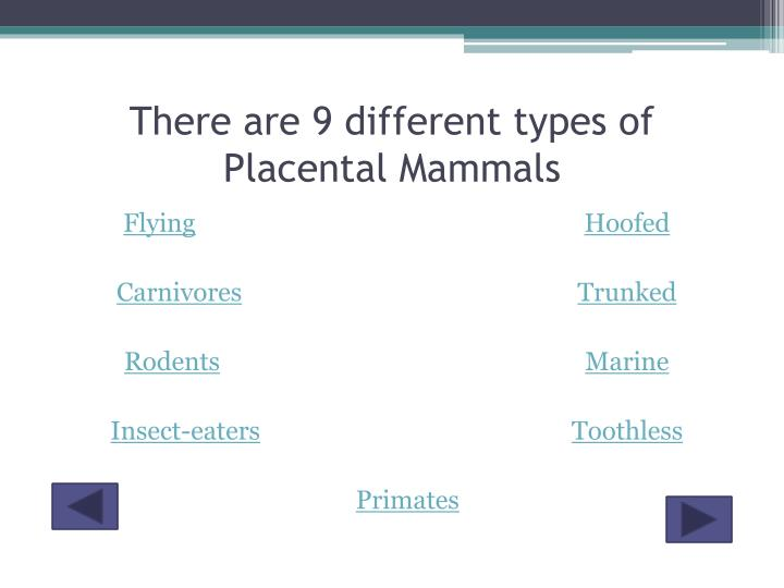 There are 9 different types of Placental Mammals