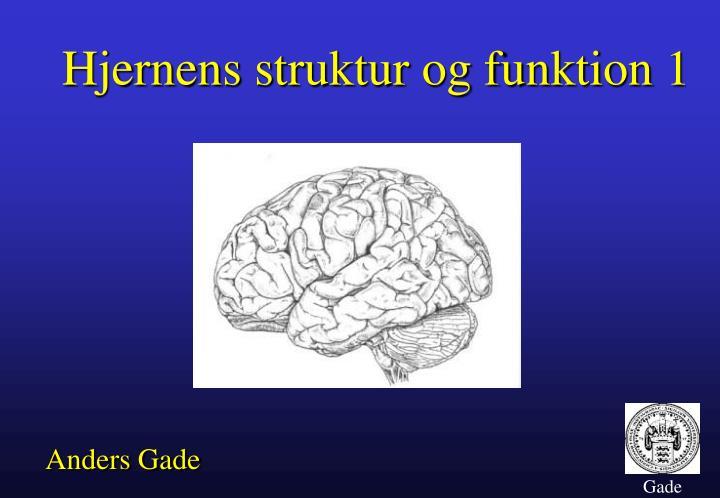 Hjernens struktur og funktion 1