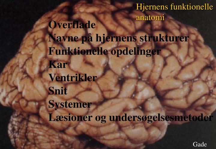 Hjernens funktionelle