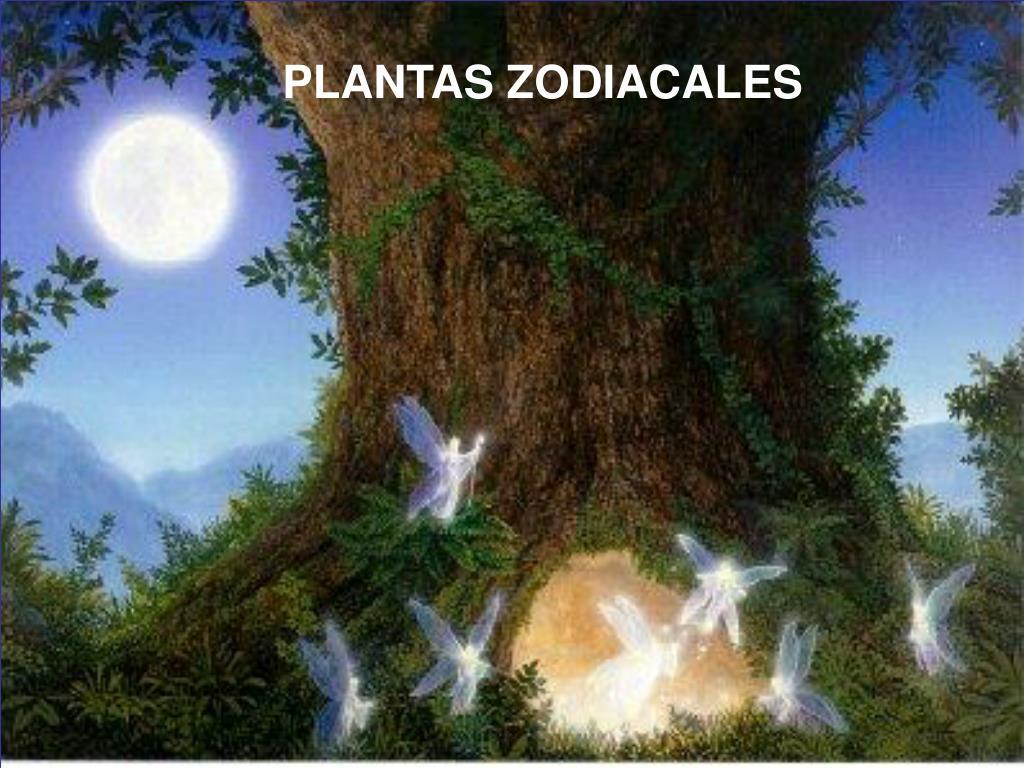 PLANTAS ZODIACALES