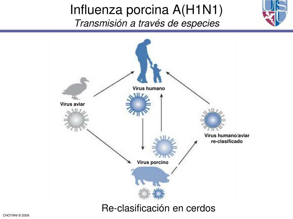 Influenza porcina A(H1N1)