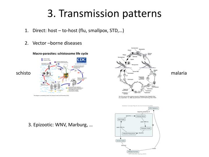 3. Transmission patterns