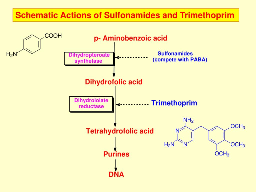 Schematic Actions of Sulfonamides and Trimethoprim