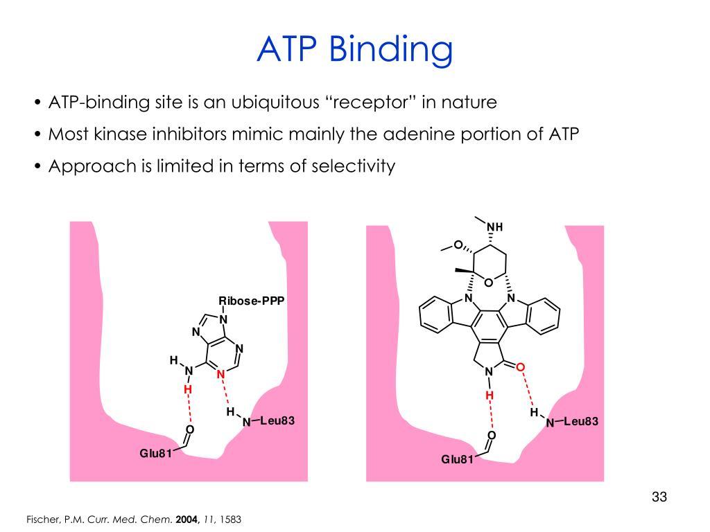 ATP Binding