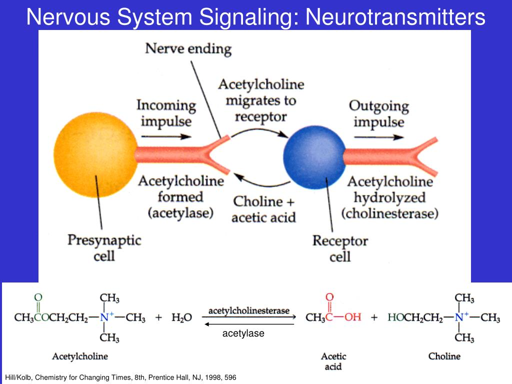 Nervous System Signaling: Neurotransmitters