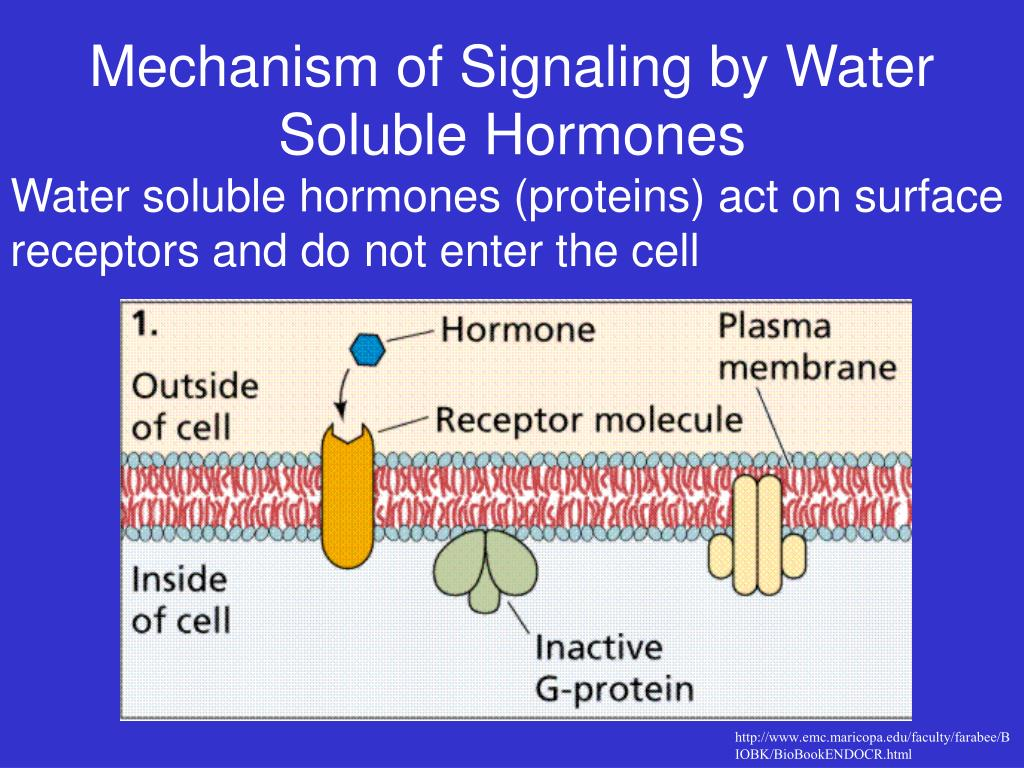 Mechanism of Signaling by Water Soluble Hormones
