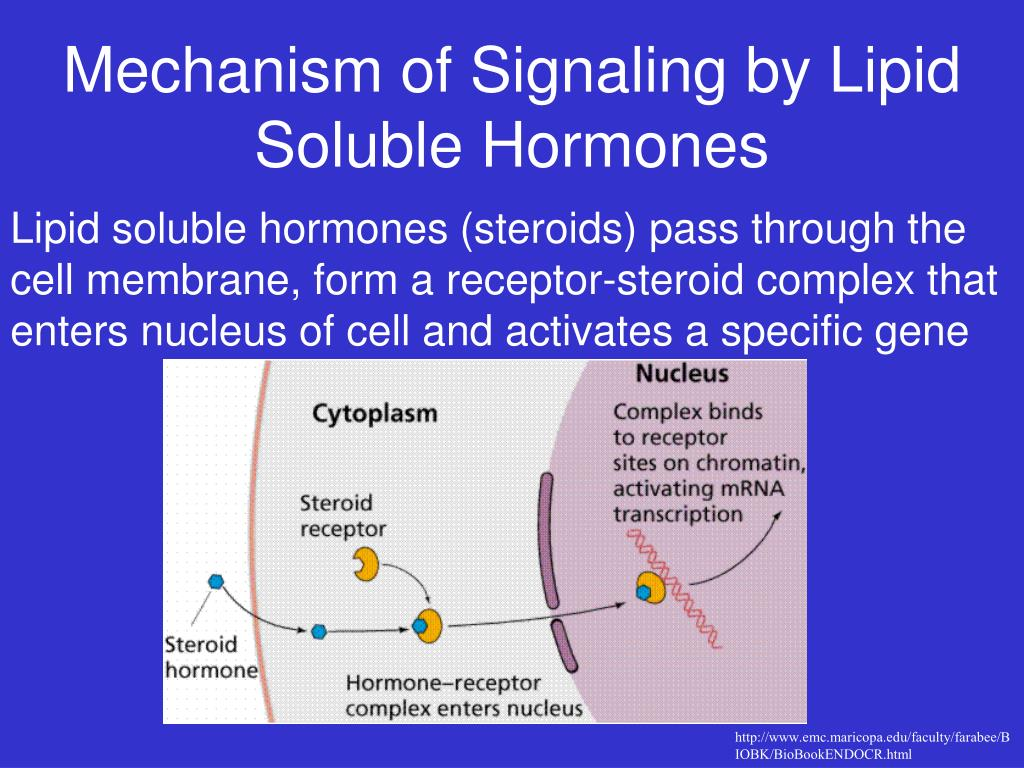Mechanism of Signaling by Lipid Soluble Hormones