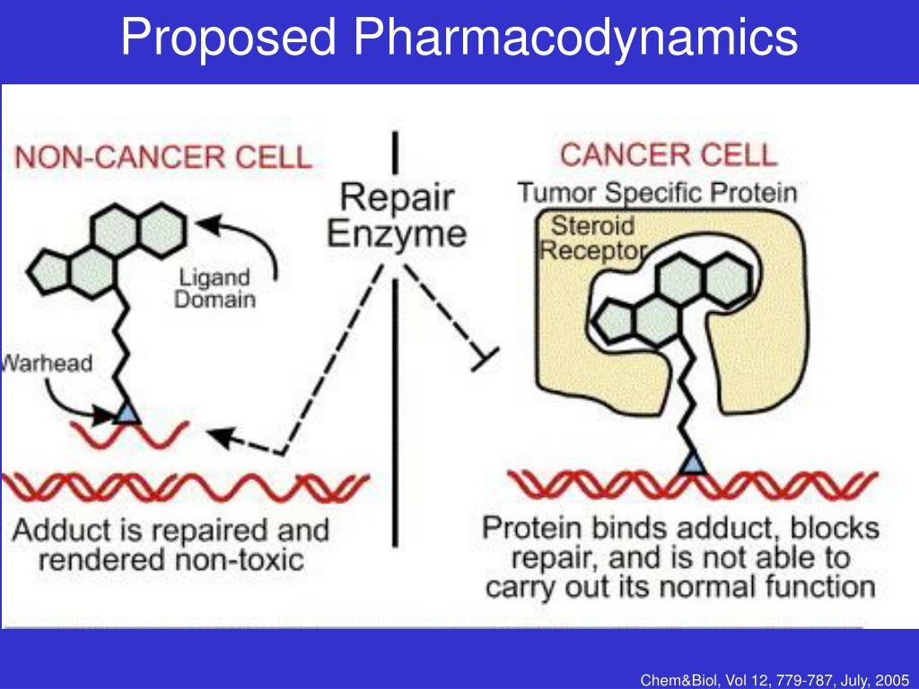 Proposed Pharmacodynamics