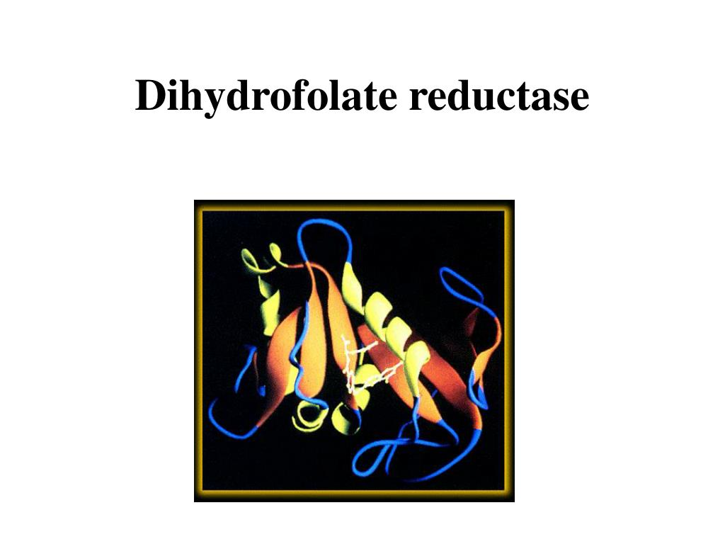 Dihydrofolate reductase