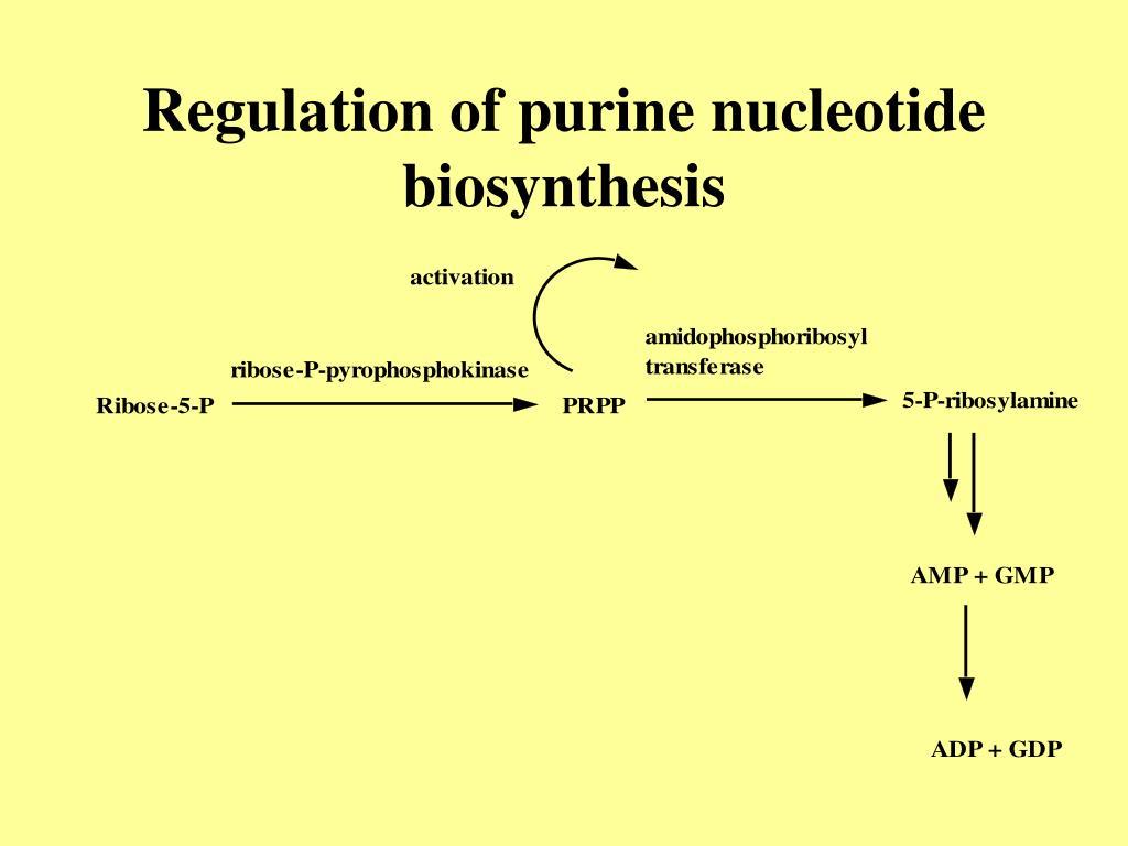 Regulation of purine nucleotide biosynthesis