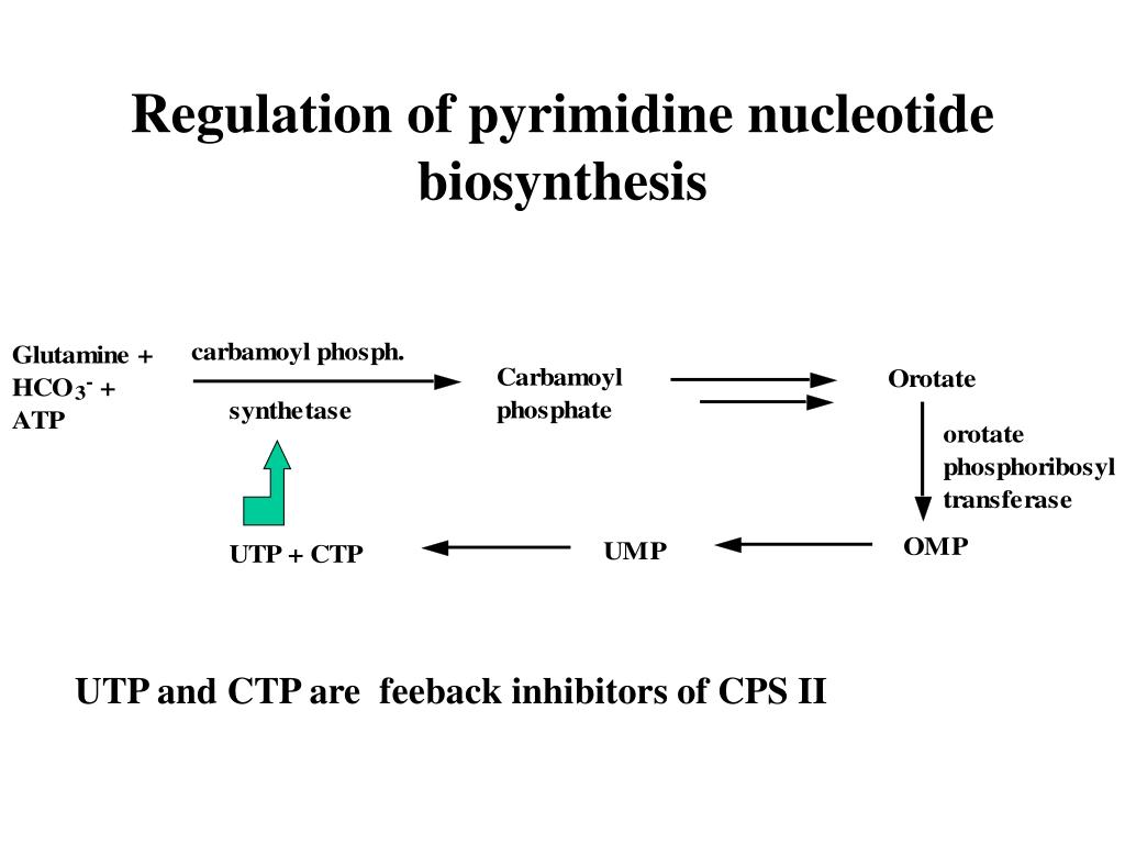 Regulation of pyrimidine nucleotide biosynthesis