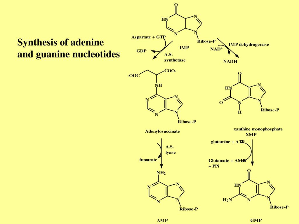 Synthesis of adenine