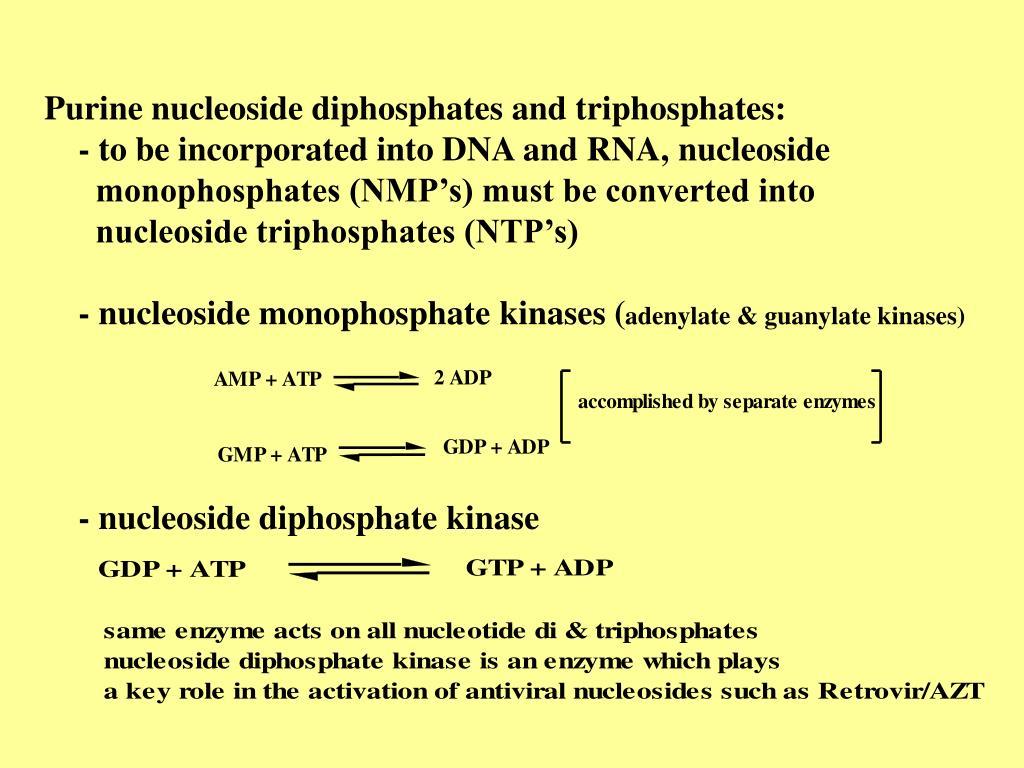 Purine nucleoside diphosphates and triphosphates: