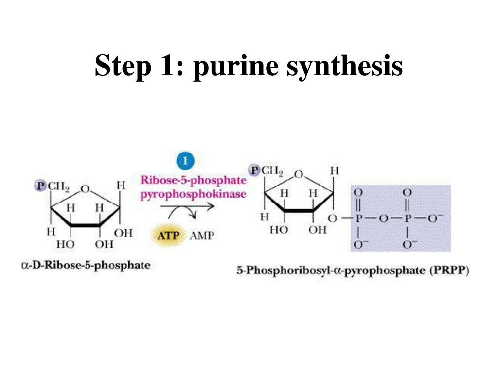Step 1: purine synthesis