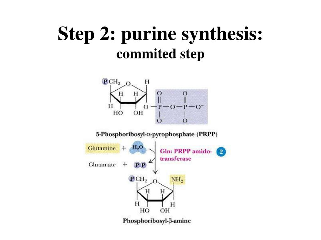 Step 2: purine synthesis: