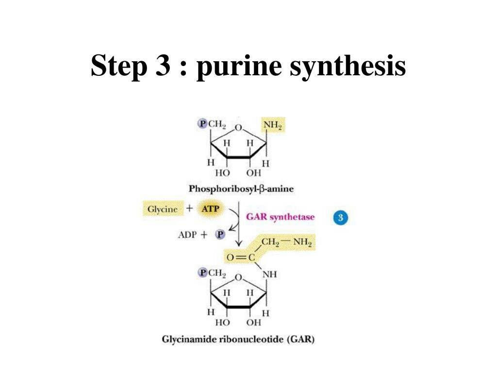 Step 3 : purine synthesis