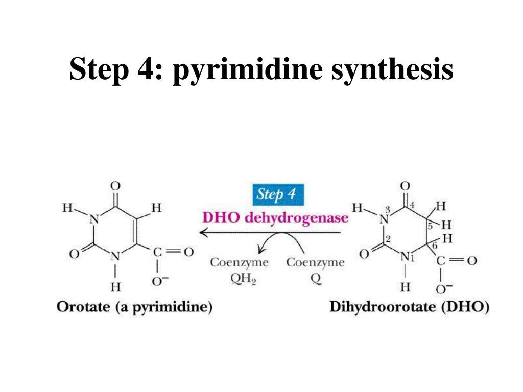 Step 4: pyrimidine synthesis
