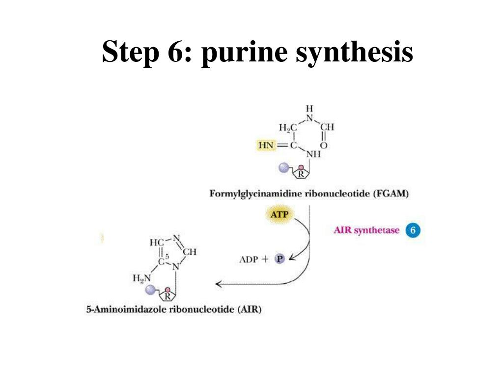 Step 6: purine synthesis