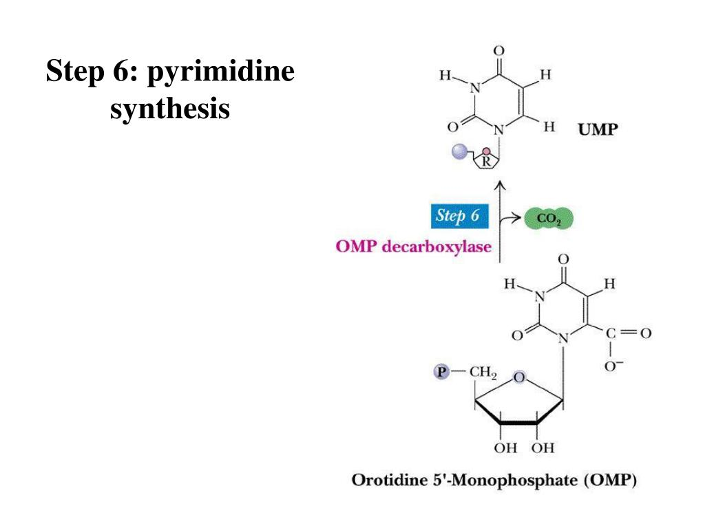 Step 6: pyrimidine synthesis