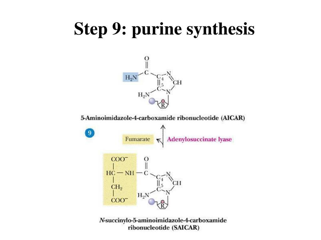 Step 9: purine synthesis
