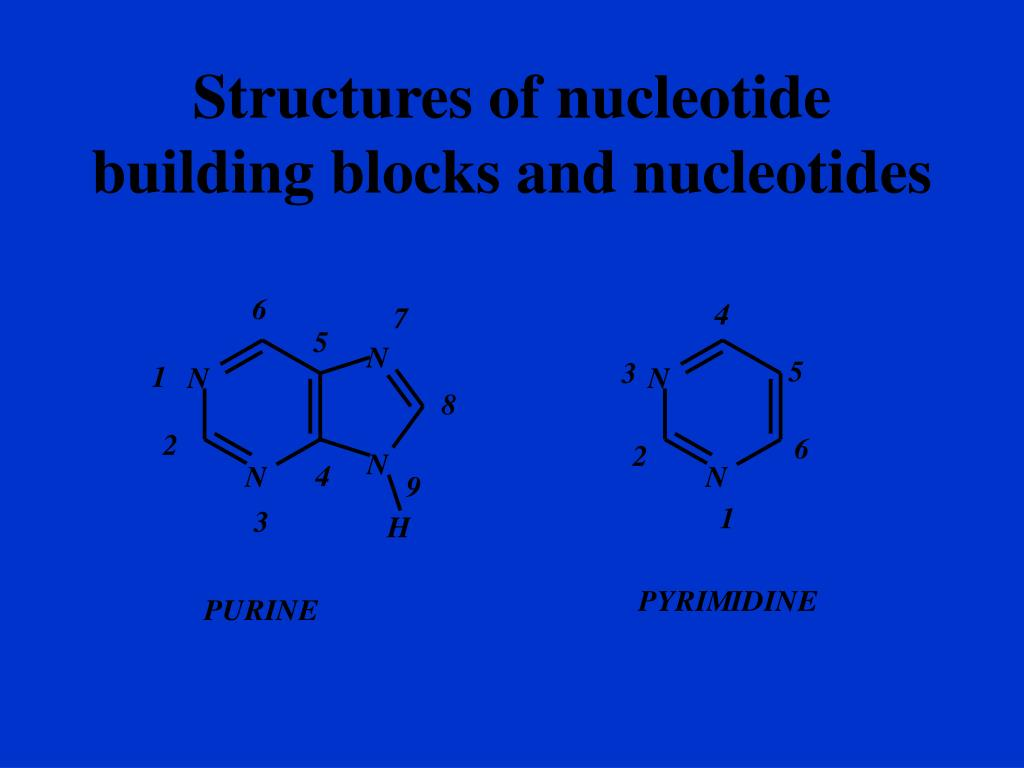 Structures of nucleotide building blocks and nucleotides