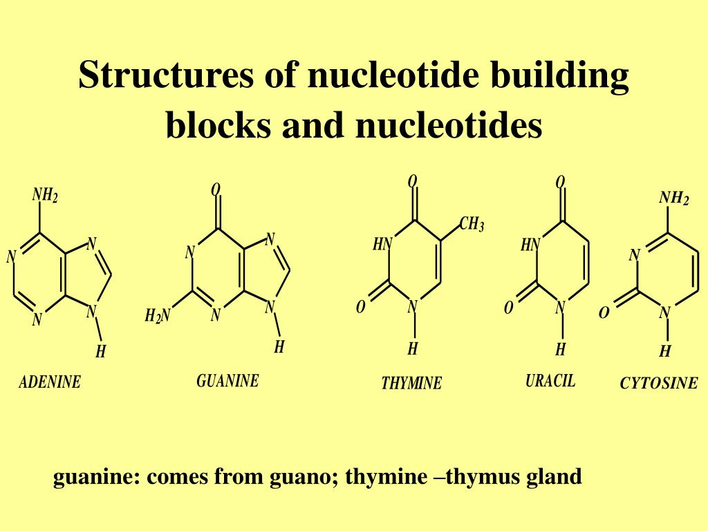 Structures of nucleotide building