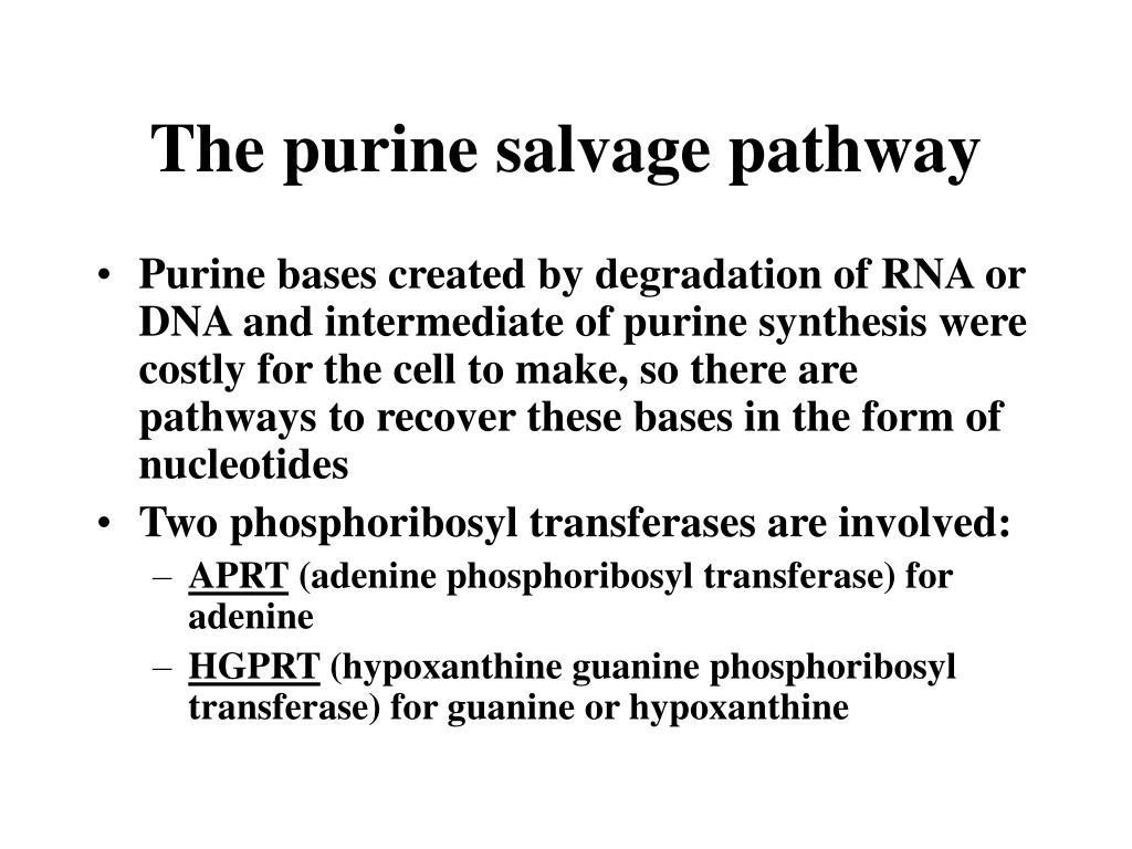 The purine salvage pathway