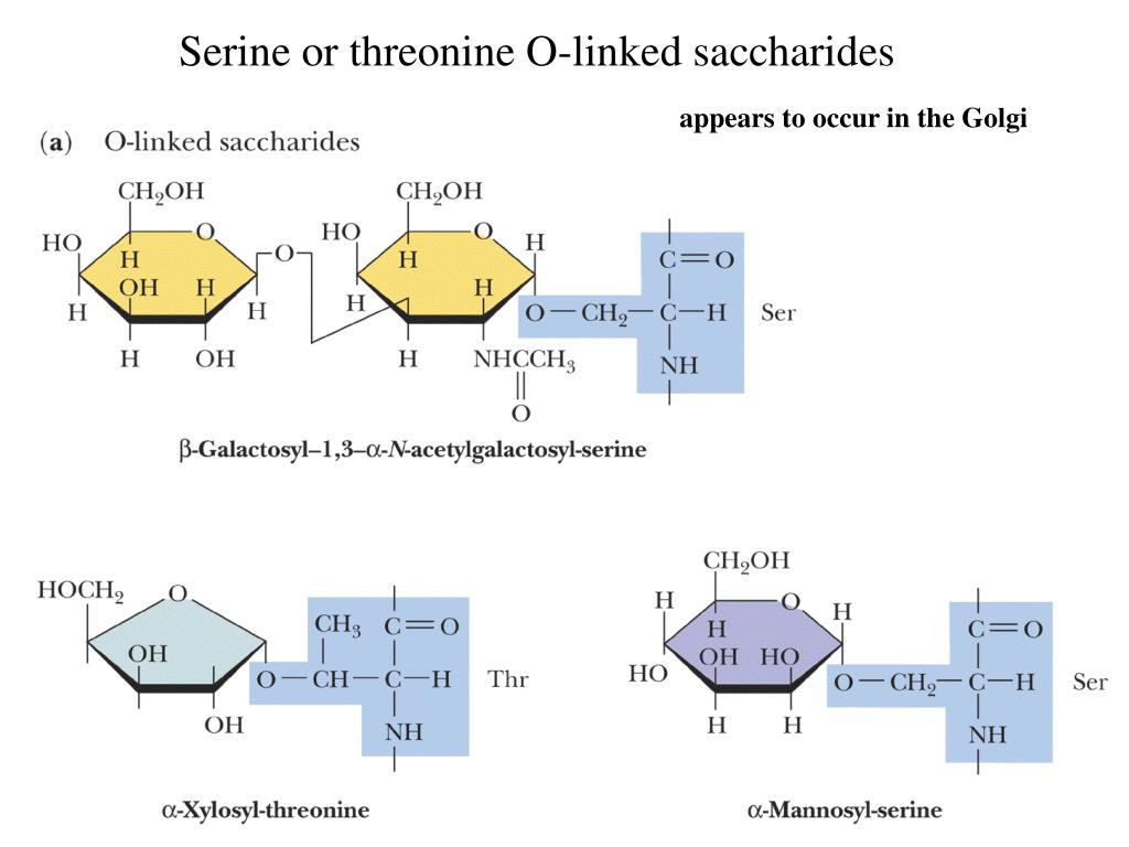 Serine or threonine O-linked saccharides