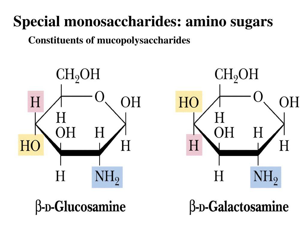 Special monosaccharides: amino sugars