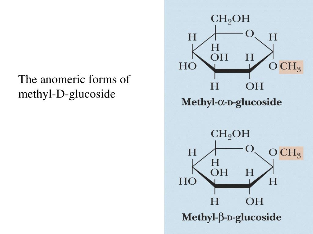 The anomeric forms of