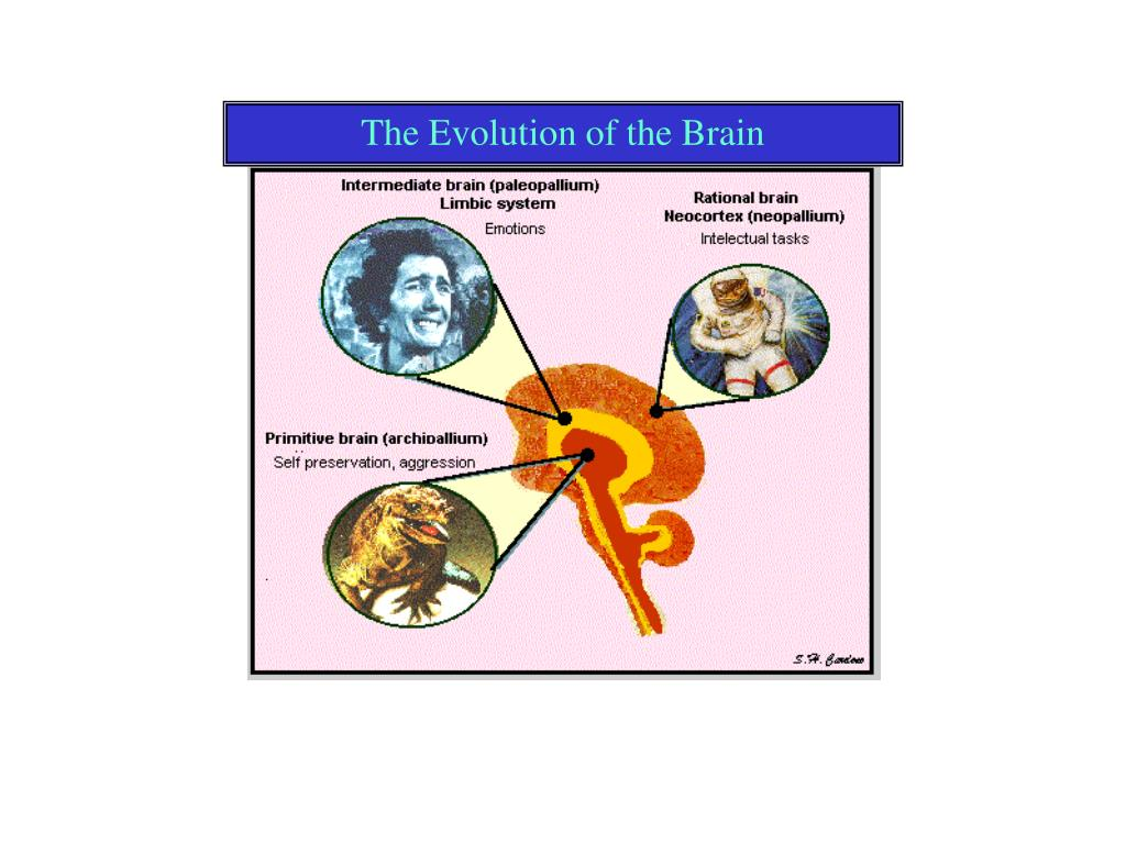 The Evolution of the Brain