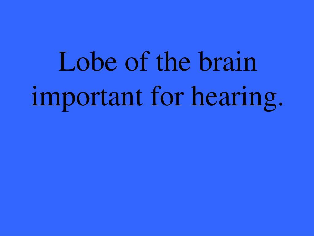 Lobe of the brain