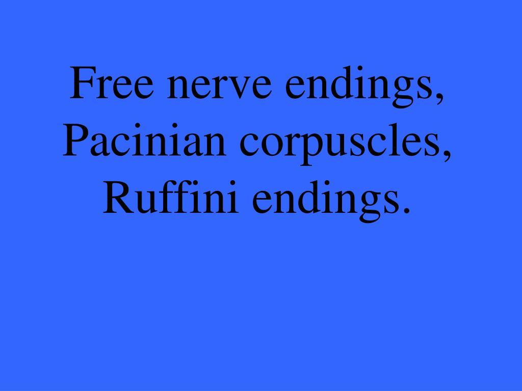 Free nerve endings,