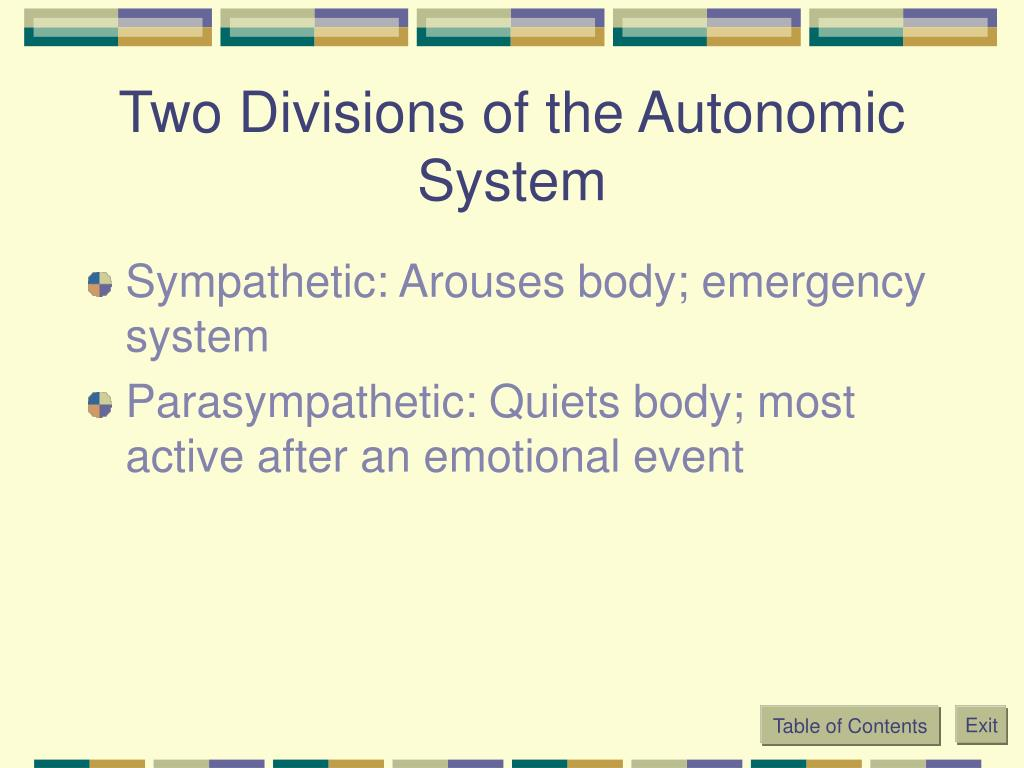Two Divisions of the Autonomic System