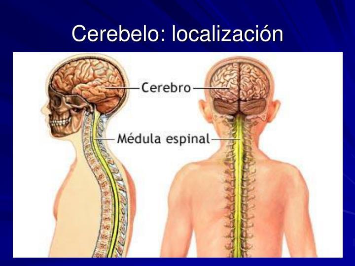Cerebelo: localización