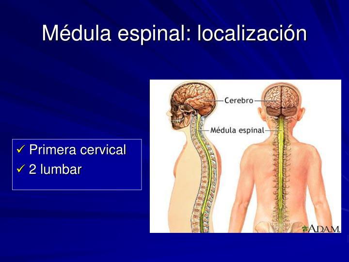 Médula espinal: localización