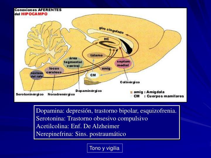 Dopamina: depresión, trastorno bipolar, esquizofrenia.