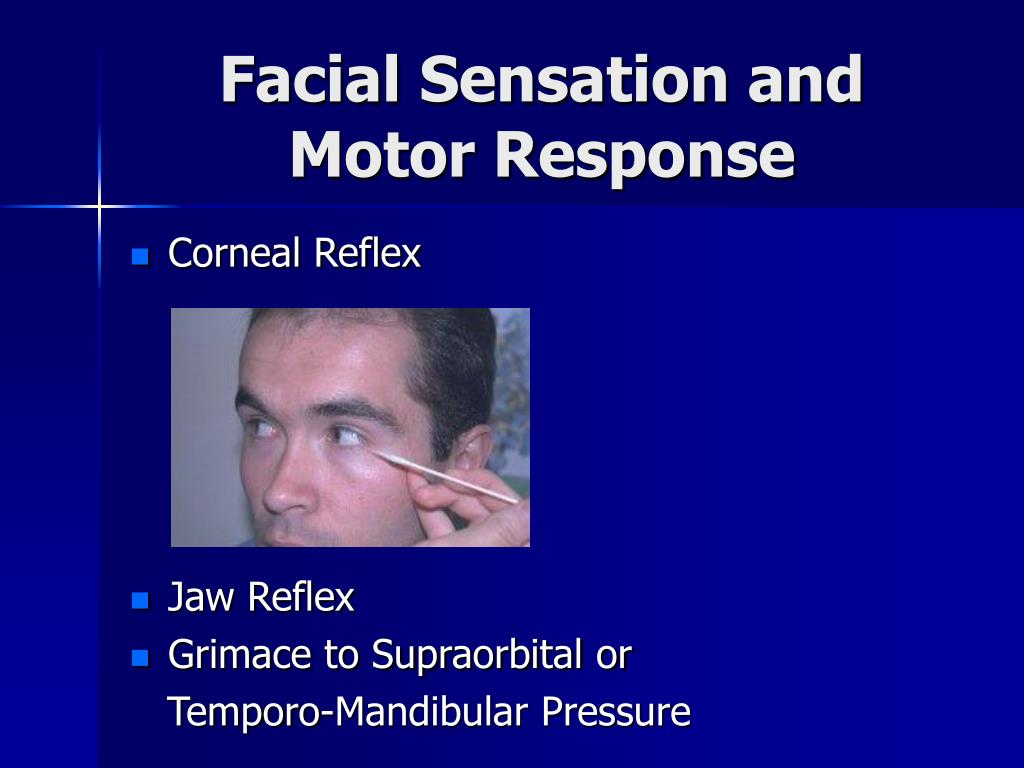 Facial Sensation and Motor Response