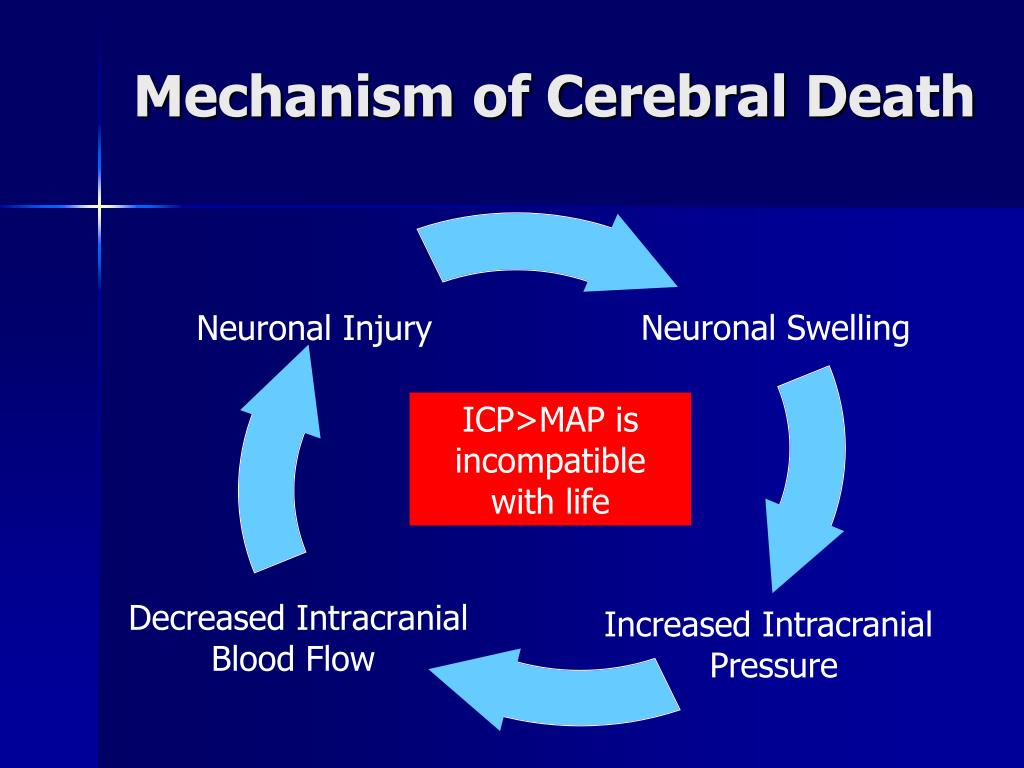 Mechanism of Cerebral Death