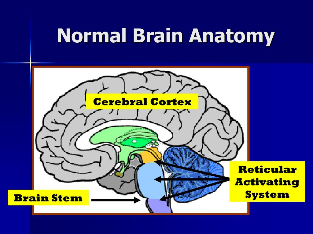 Normal Brain Anatomy