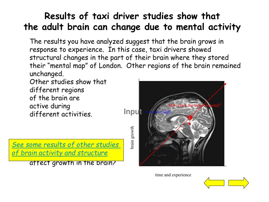 Results of taxi driver studies show that