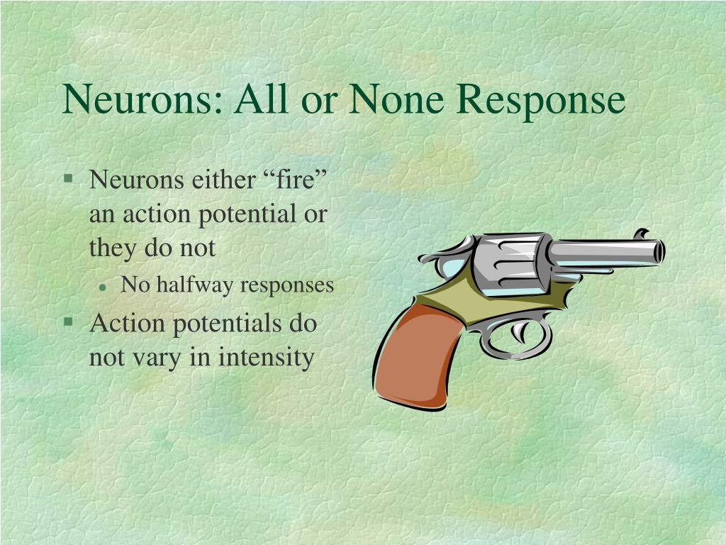 Neurons: All or None Response