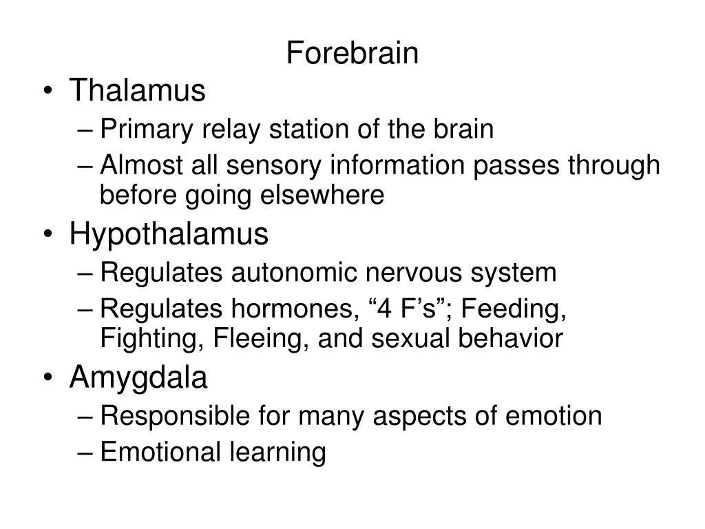 Forebrain