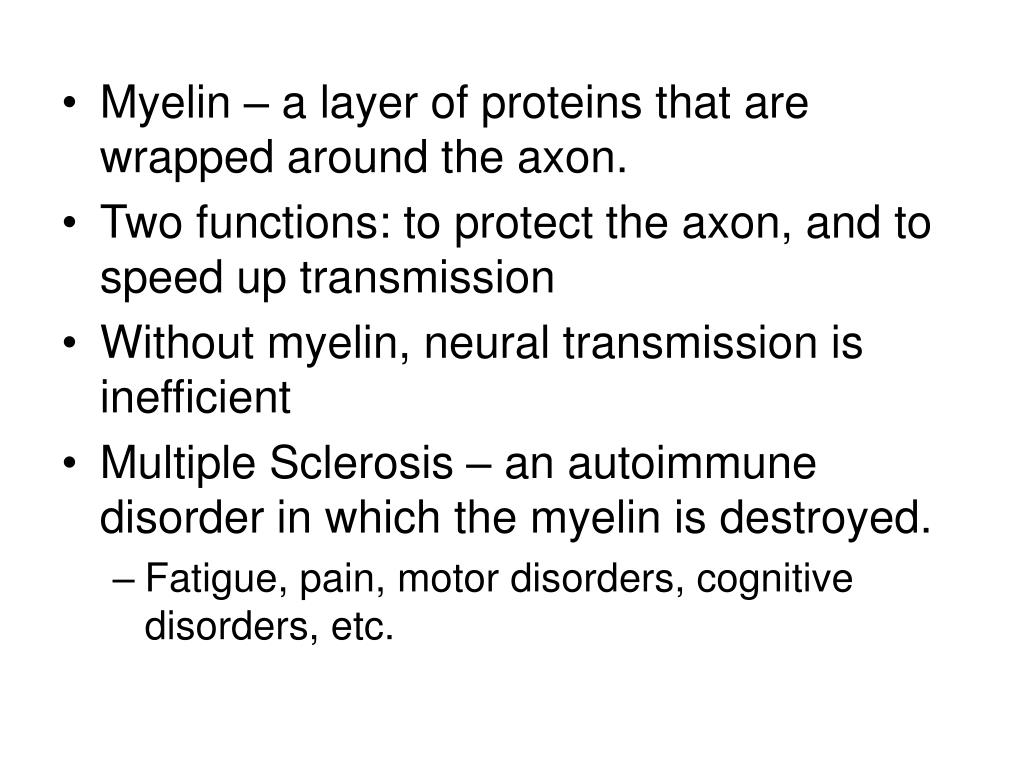 Myelin – a layer of proteins that are wrapped around the axon.