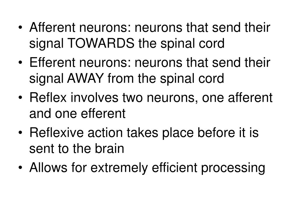 Afferent neurons: neurons that send their signal TOWARDS the spinal cord