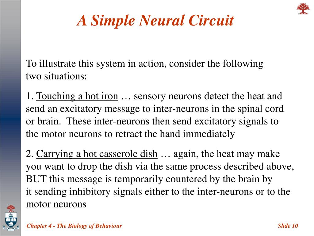 A Simple Neural Circuit