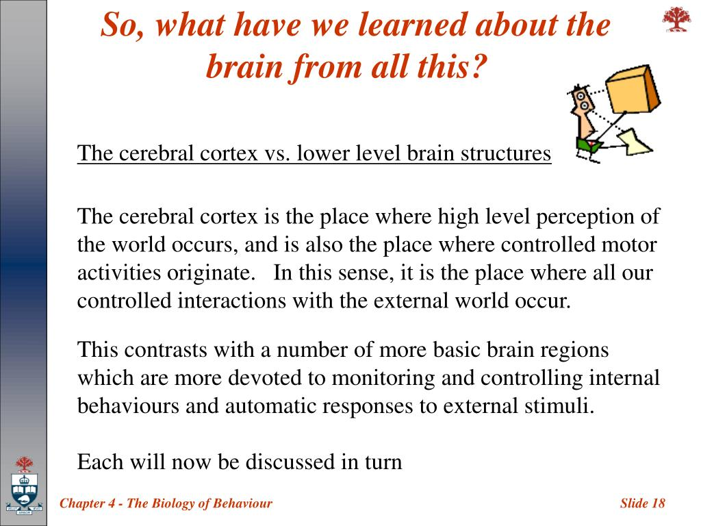 So, what have we learned about the brain from all this?