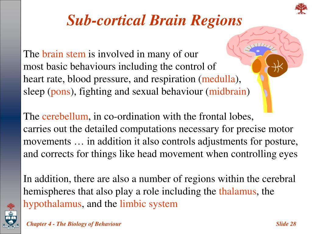 Sub-cortical Brain Regions