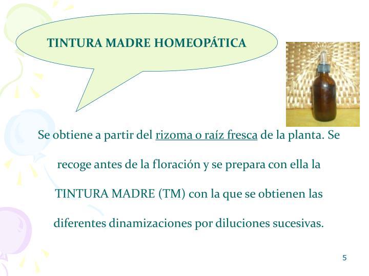 TINTURA MADRE HOMEOPÁTICA